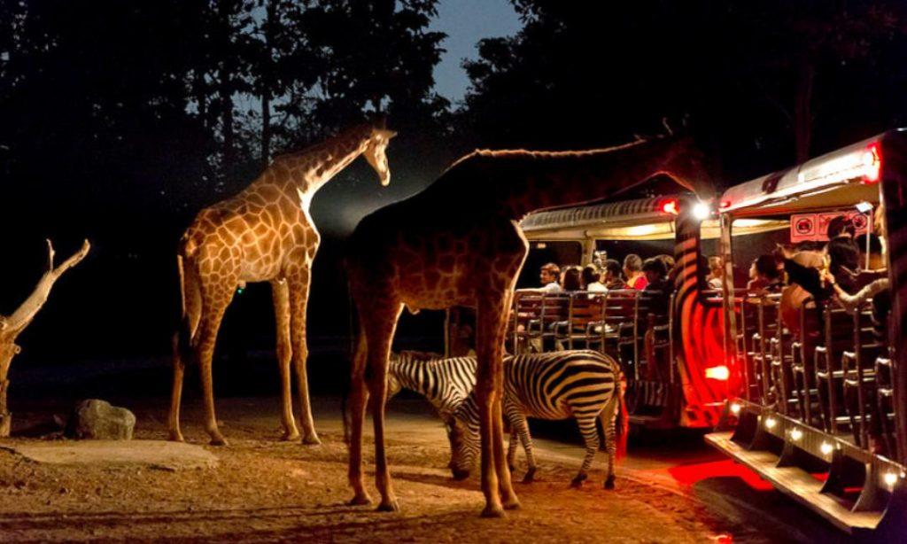 Night Safari - Roaming Routes